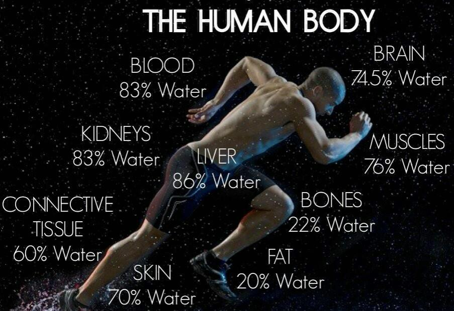 Function of water in the body